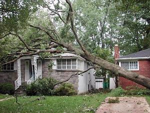 Tree has fallen a home and will need roof repair